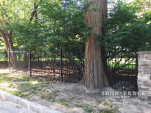 5ft Tall Classic Iron Fence Installed to Look Like its Passing Through a Tree