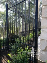 5ft Tall Puppy Picket Style Prefab Iron Fence in Traditional Grade